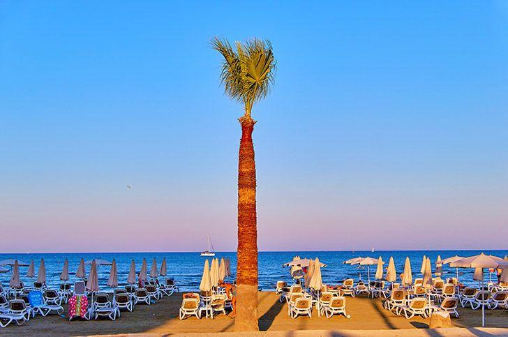 Long palm tree on beach in Cyprus Larnaca